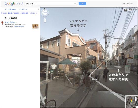 110905_tanuki.jpg