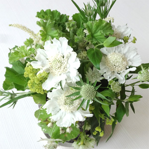 130612_flower.jpg
