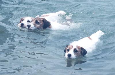 130810_swimming.jpg