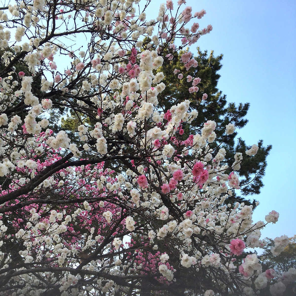 http://syuna-bani.net/blog/IMG_5661.jpg
