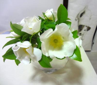 140428_flower.jpg