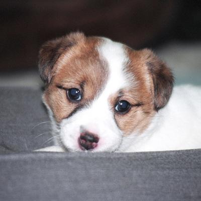 donna_puppy.jpg