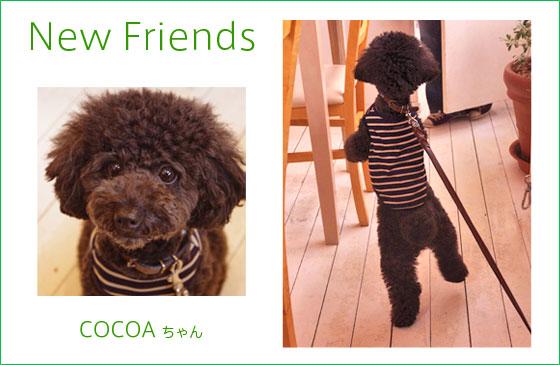 cocoa_chan.jpg