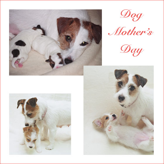 dog-mother's-day2.jpg
